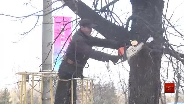 Після спеціального навчання комунальники взялися за обрізку дерев на просп. Чорновола