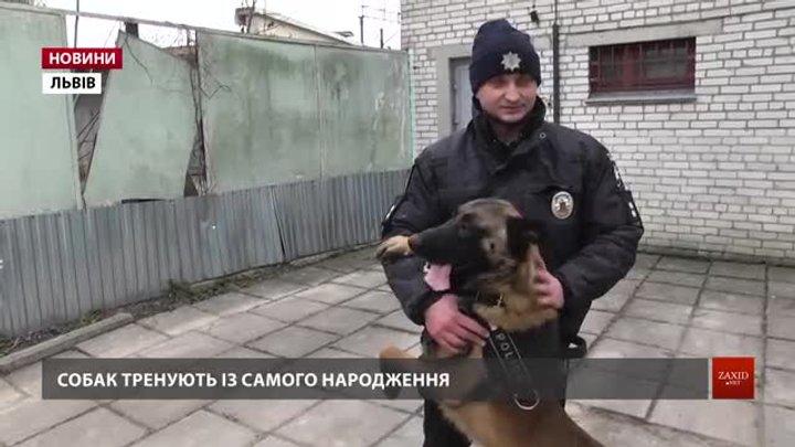 Собаки допомогли розкрити понад 250 злочинів на Львівщині минулого року