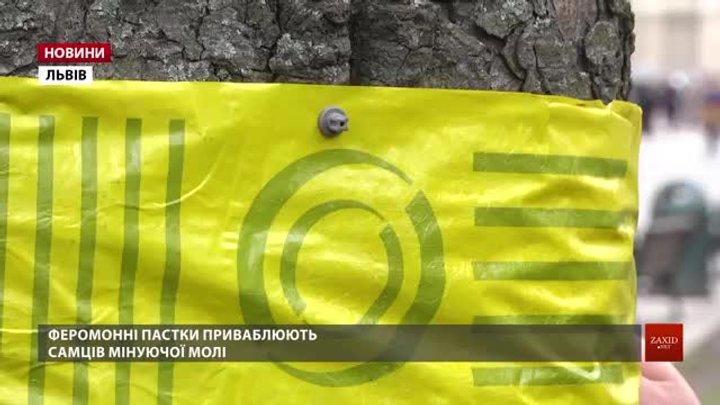 Львівські каштани рятуватимуть від шкідників феромонами