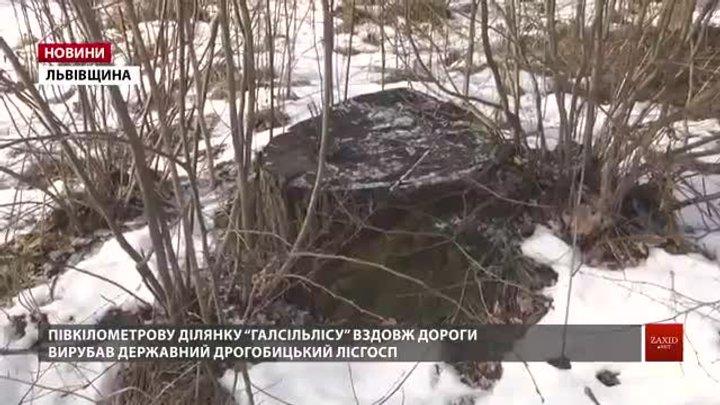 На Дрогобиччині державний лісгосп вирубав дерева «Галсільлісу» на мільйон гривень
