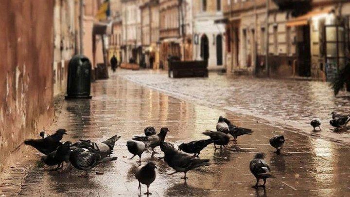 Головні новини Львова за 1 жовтня