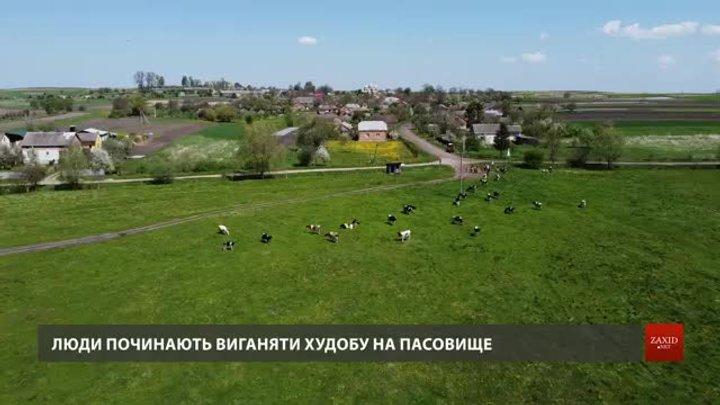 Мешканці села на Львівщині вимагають від Держгеокадастру повернути їм пасовище