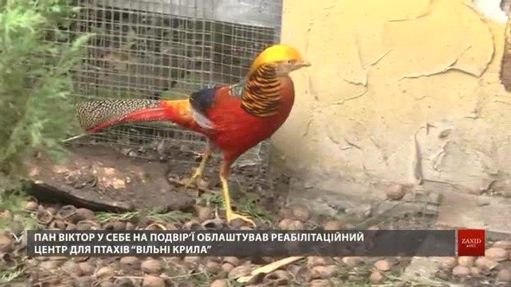 Біля Львова працює центр реабілітації травмованих птахів